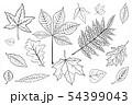Set leaves of black on white. Vector illustration. 54399043