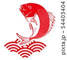鯛 タイ たい イラスト 54403404