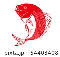 鯛 タイ たい イラスト 54403408