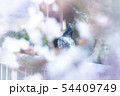 【ハト】・春・幻想的 54409749