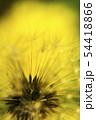 幻想的なタンポポの綿毛のクローズアップ写真 54418866