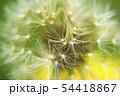 幻想的なタンポポの綿毛のクローズアップ写真 54418867