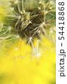 幻想的なタンポポの綿毛のクローズアップ写真 54418868