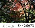愛媛県大洲市稲荷山公園の紅葉 54426973