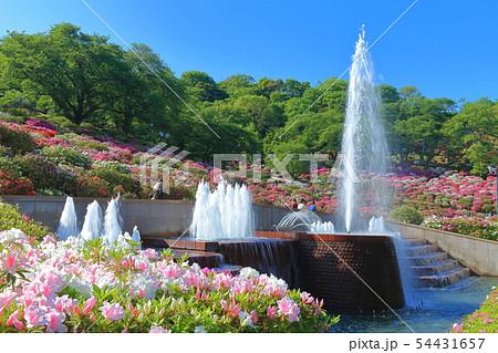 【福井県】晴天下の西山公園つつじまつり 54431657