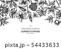 Floral design with black and white bellflower, edelweiss, globethistle, globeflower, meadow geranium 54433633
