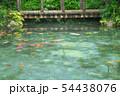 岐阜県・関市 モネの池 54438076