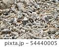 沖縄 ビーチに打ち上げられたサンゴ 54440005