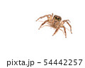 jumping spider insect nature background  54442257