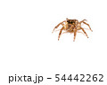 jumping spider insect nature background  54442262