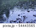 雨の水紋 水たまり 雨 雨天 雨滴 54443565