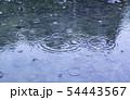 雨の水紋 水たまり 雨 雨天 雨滴 54443567