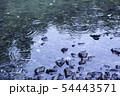 雨の水紋 水たまり 雨 雨天 雨滴 54443571