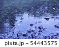 雨の水紋 水たまり 雨 雨天 雨滴 54443575