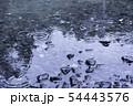 雨の水紋 水たまり 雨 雨天 雨滴 54443576