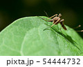 mosquito on on green leaf 54444732