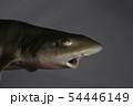 サメ 暗い 怖い イメージ 54446149