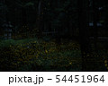 ヒメボタルの乱舞 54451964