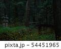 ヒメボタルの乱舞 54451965