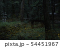 ヒメボタルの乱舞 54451967