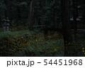 ヒメボタルの乱舞 54451968