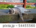 尾道の猫 54455560