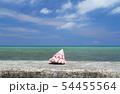 沖縄 恩納村の青い海とタカセガイ 54455564