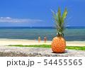 沖縄のパイナップルと青い海 54455565