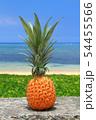 沖縄のパイナップルと青い海 54455566