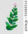 Vector illustration of indian plant. 54464514