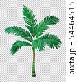 Vector illustration of palm tree. 54464515