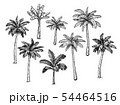 Collection of palm trees. 54464516
