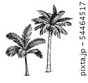 Ink sketch of palm trees. 54464517