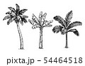 Ink sketch of palm trees. 54464518