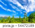 《長野県》新緑の乗鞍高原・白樺と青空 54472189