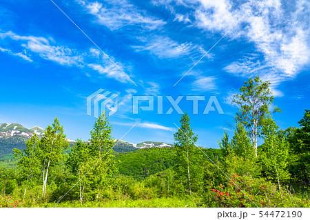 《長野県》新緑の乗鞍高原・白樺と青空 54472190