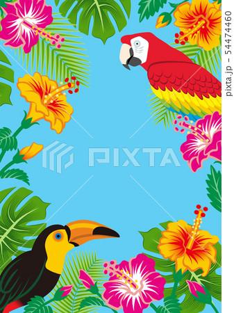 熱帯の鳥と植物のフレーム - コピースペースあり A4比率 青色背景 54474460
