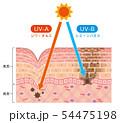 肌図 紫外線ダメージ 54475198