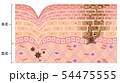 肌図 紫外線ダメージ 54475555