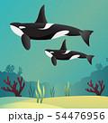 Killer whale Orca 54476956