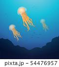 lion mane jellyfish 54476957