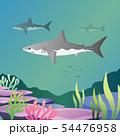Great white shark 54476958