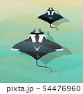 Manta Ray 54476960