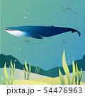 Blue whale 54476963