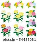 菊 花束 セット 54488031
