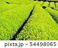 新緑の茶畑-13171 54498065
