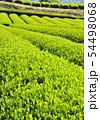新緑の茶畑-13174 54498068