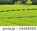 新緑の茶畑-13191 54498069