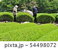 茶刈り-13200 54498072