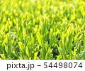 新緑の茶葉-13202 54498074
